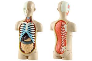letnij-lager-anatomia